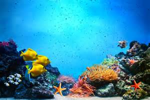 Skateboard Bedroom Ideas underwater scene coral reef fish groups in clear ocean