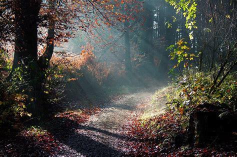 chemin dans les bois pour t 233 l 233 charger des photos de beaux