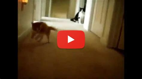 best compilation best kitten compilation for march 2015 cats