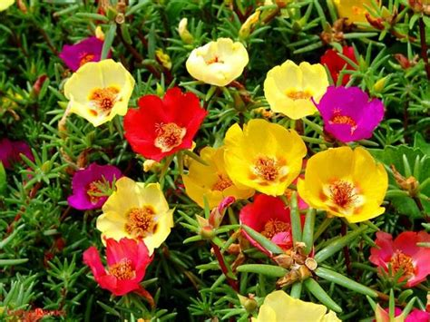 Best Planter Flowers by 24 Best Drought Tolerant Plants That Grow In Lack Of Water