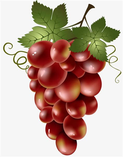 imagenes animadas sobre uvas un racimo de uvas las uvas rojas hojas de uva un racimo