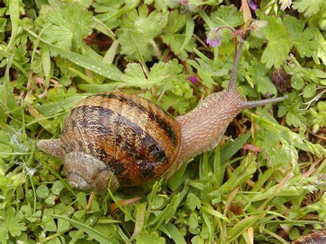 garden pests uk identifying common garden pests secretgarden co uk