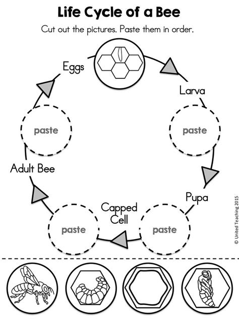 kindergarten activities bees 142 best bee insects and spiders images on pinterest
