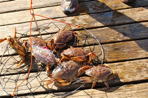 tri cities parks belcarra regional park has crab fishing more