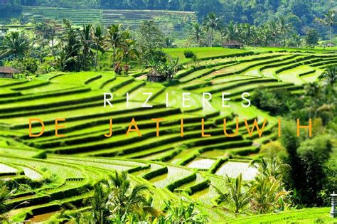 les rizieres de jatiluwih  bali mytourdumonde blog voyage