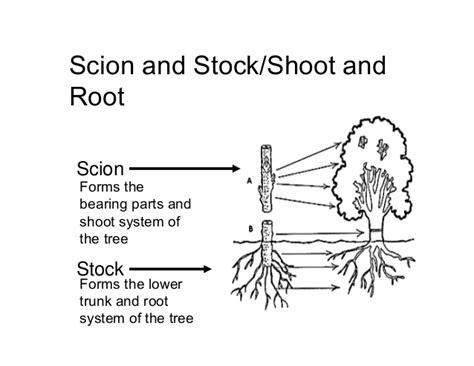 scion plant plant propagation methodologies