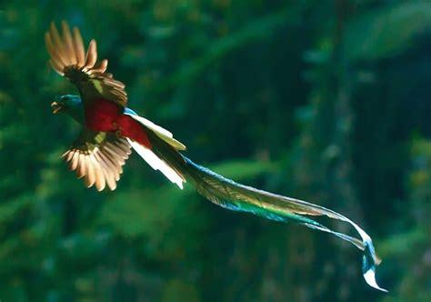 beautiful birds   world