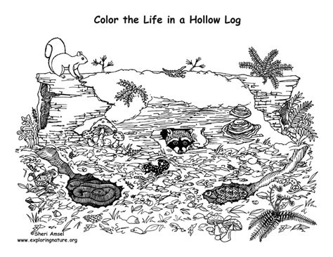 coloring pages of animals in their habitats animals living in a hollow log coloring nature