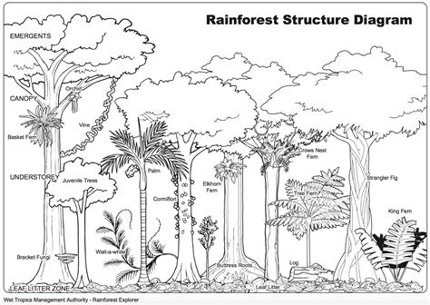 mangrove tree coloring page mangrove animals coloring pages mangrove best free