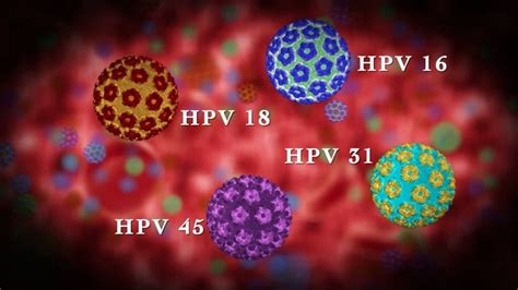 HPV: Warting Off Cervical Cancer - Panhandle OBGYN Human Papillomavirus (hpv)