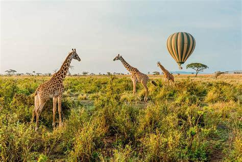best safari tour operators unforgettable safari tours in tanzania easy travel
