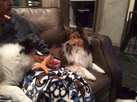 do dogs get jealous do dogs get jealous