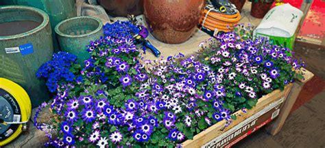 boise flower and garden show boise flower garden show in boise id boise flower
