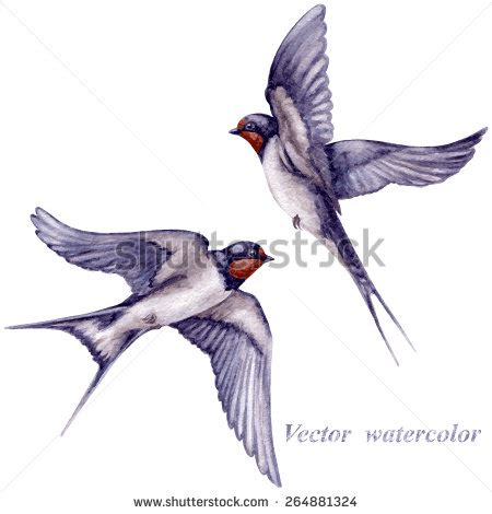 swallow stock images royalty free images amp vectors