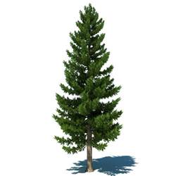 picture of a tree 3dsmax pine tree
