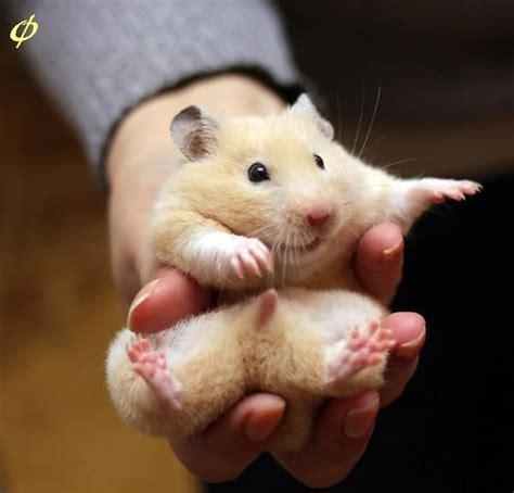 hamster bedroom cute hamster 1funny com