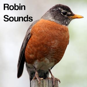 robin bird sounds android apps on google play