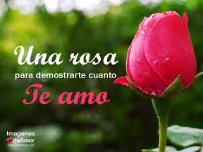 imagenes de rosas te amo 18 im 225 genes chidas de amor con frases gratis