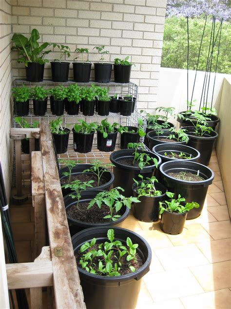 balcony vegetable garden in sydney australia just
