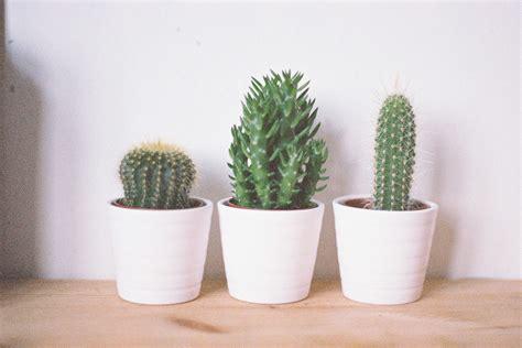 Dorm tips tiny greenery