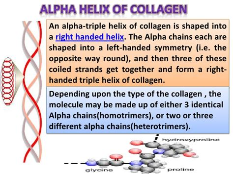Alpha Collagen the gallery for gt alpha helix structure