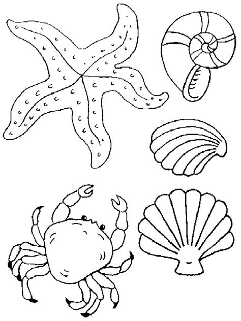 free coloring pages of a shells