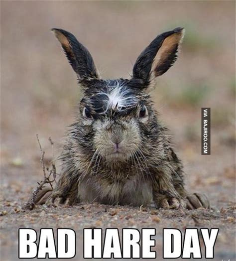 Bad Hair Day Meme - meme bad hair day image memes at relatably com