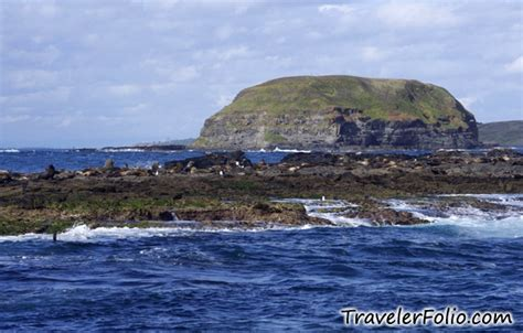 Cruise Seal The Deal With A 3 Minute by Phillip Island Seal Cruise