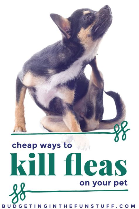 how to kill dog fleas in the house cheap ways to kill fleas on your pet budgeting in the