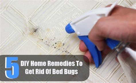 diy get rid of bed bugs 5 diy home remedies to get rid of bed bugs diy home things