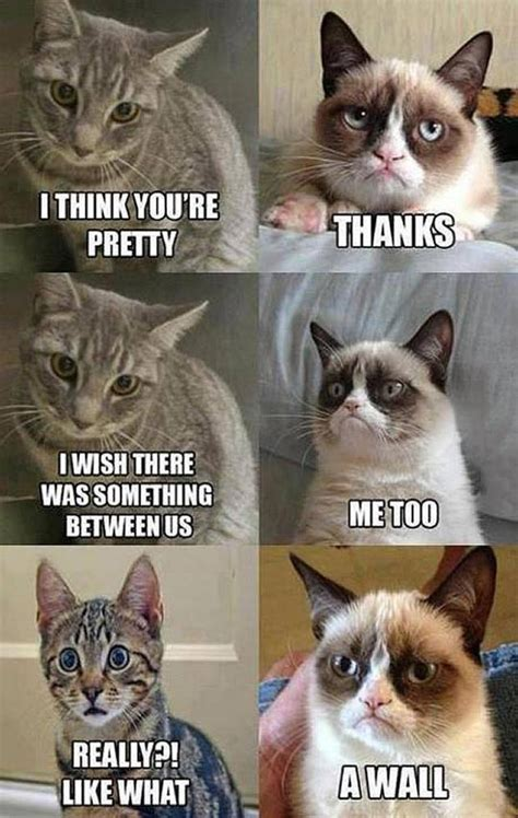 Grumpy Cat Love Meme - cat to breathe is to write