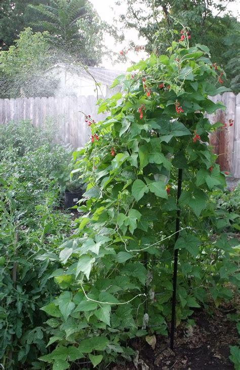 17 Best Images About Garden Watering On Pinterest Self Water Vegetable Garden