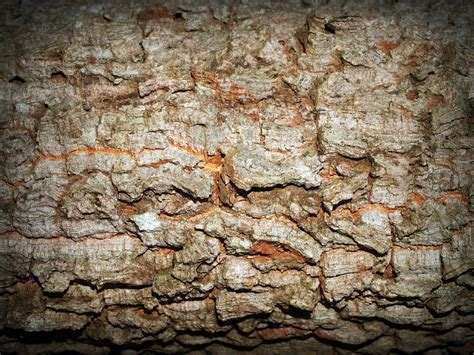 Abstrak Leaf Brown free images tree nature forest rock branch abstract board wood antique texture plank