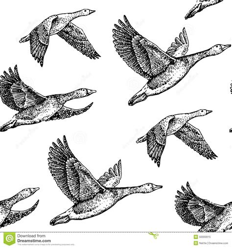 vintage pattern flying flying geese stock vector image 50000915