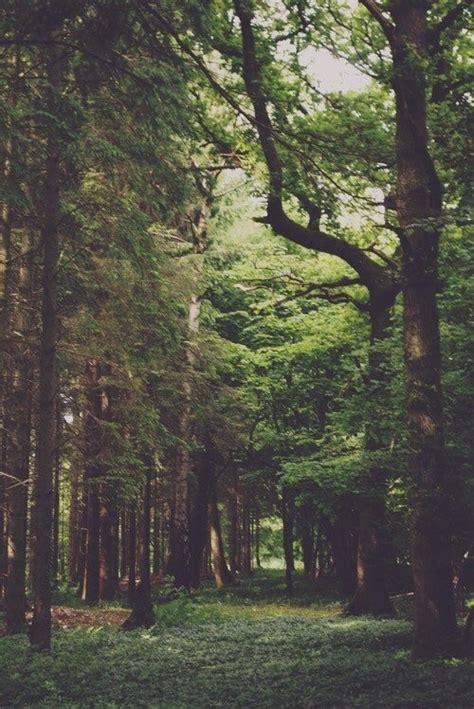 imagenes hipster naturaleza paisaje verde tumblr