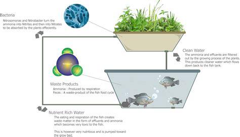aquaponics diagram aquaponics usaquaponics