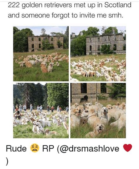 222 golden retrievers 222 golden retrievers met up in scotland and someone forgot to invite me smh rude
