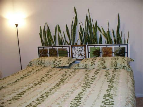 zimmerpflanze schlafzimmer zimmerpflanze f 252 r jedes zimmer passend ausw 228 hlen