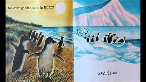 paolo the happy polar books if you were a penguin