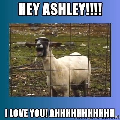 Hey I Love You Meme - hey ashley i love you ahhhhhhhhhhh screaming goat