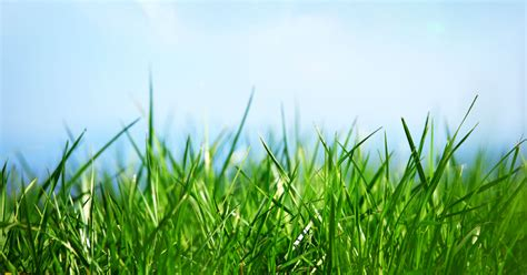 lawn care image gallery lawn care