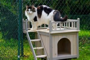 garde chat la pension des 3 chats pension pour chats