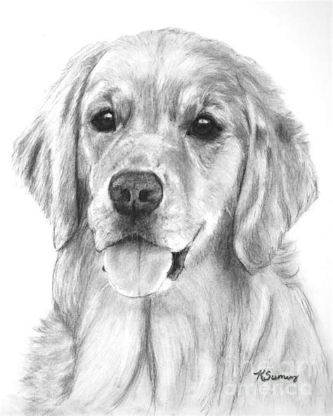 drawings of golden retrievers 25 best ideas about drawings on how to draw dogs drawing
