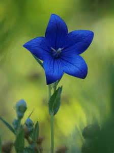 25 most beautiful types of blue flowers you haven t seen before page 2 magazine8