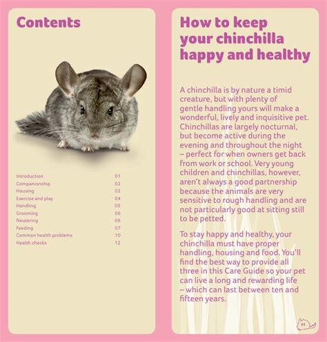 how to care for a chinchilla care guide