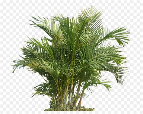 houseplant indoor air quality gardening health palm