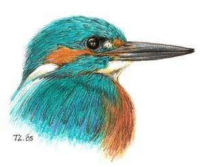 common kingfisher by chiroookami on deviantart
