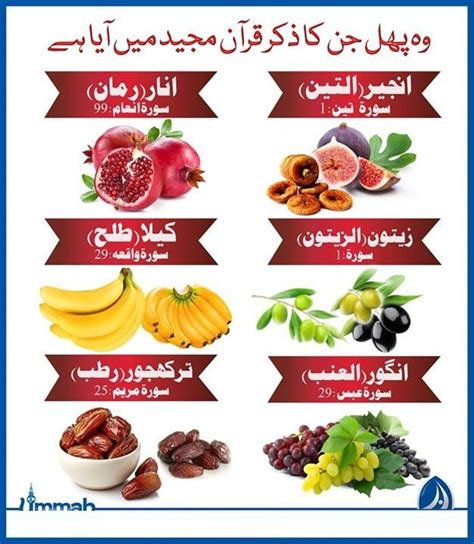 3 fruits mentioned in quran name of those fruits which names come in quran learn
