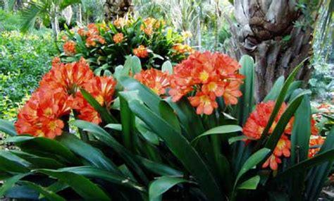 shade garden south africa google search garden