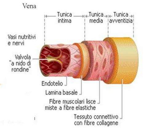 infiammazione vasi sanguigni la sclerosi multipla ccsvi vista da sam e non